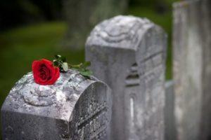 ölüm ve gül