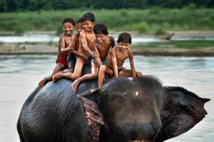 kids having fun on elephant