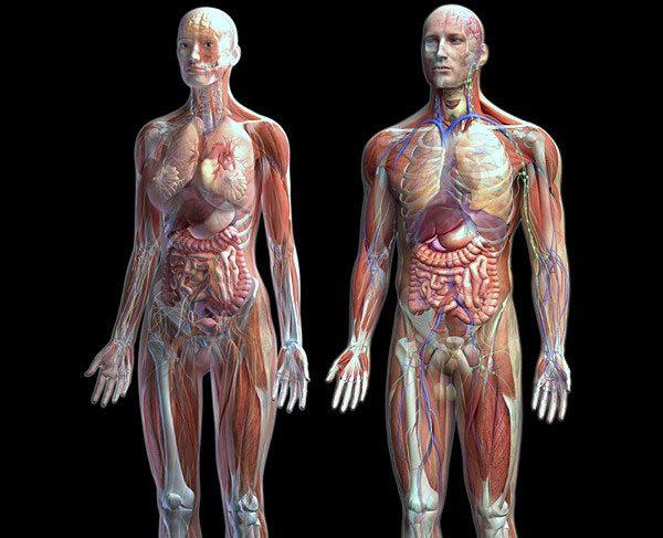 Vücudun Genel İç Görünümü