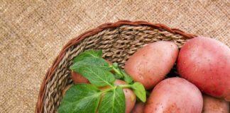 kırmızı çiğ patatesler Ana Sayfa