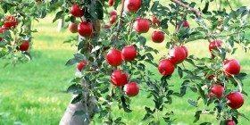 Avuç Dolusu Vitamin Hapı İçmektense Bir Elma Yemek