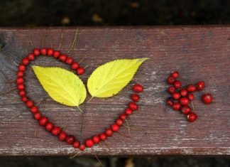 tasavvuf aşk doğa Ana Sayfa