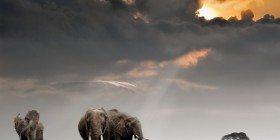 Hayvanlar Krallığı