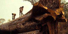 Ormanların Yok Edilmesi ve Çölleşme