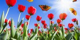 Baharın Gelişi
