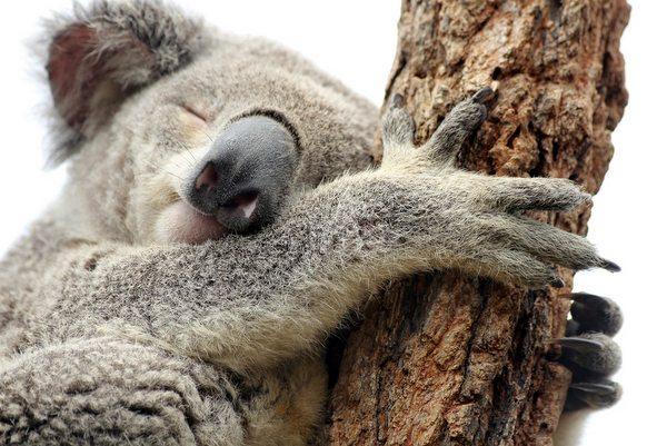 Bir Dikili Ağacınız Olsun