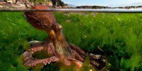 Denizlerimizi Geri İstiyoruz