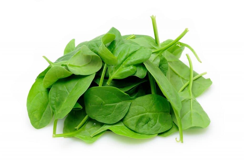 Baby spinach Bitki Bazlı Protein Kaynakları