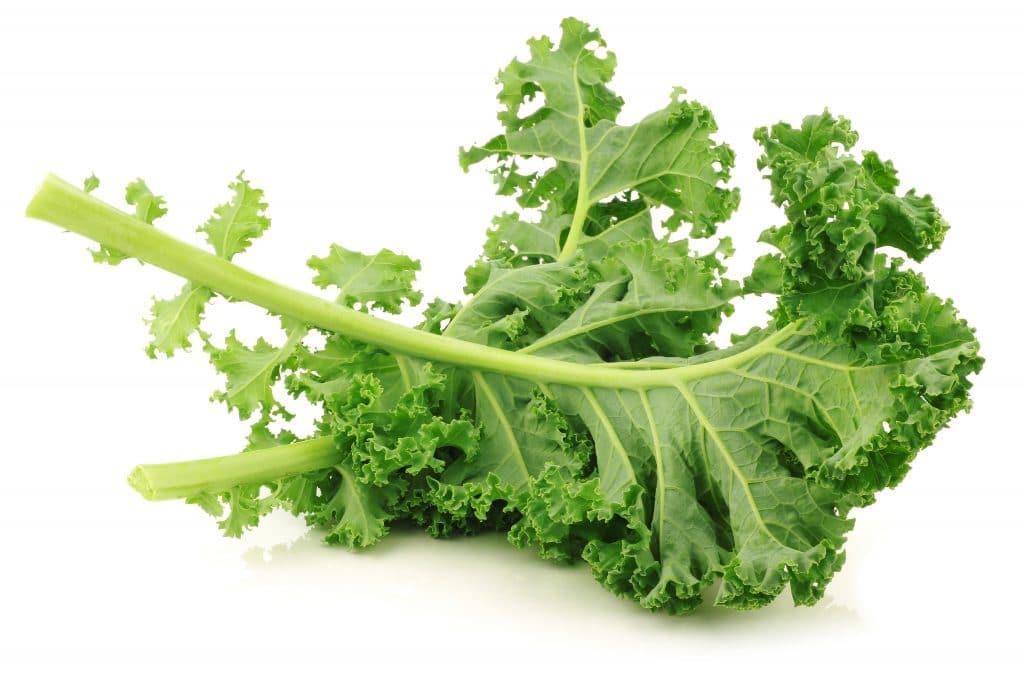 Green Curly Kale Bitki Bazlı Protein Kaynakları